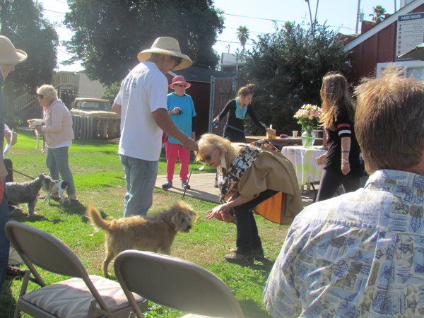 Blessing of the animals - 2015